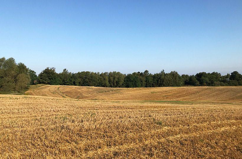 Das Stoppelfeld nach der Ernte