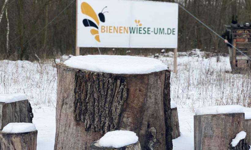 Die Bienenwiese hält Winterschlaf