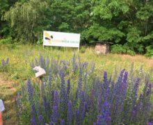 Schmetterlinge-für-die-Bienenwiese-1