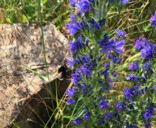 Schmetterlinge-für-die-Bienenwiese-4