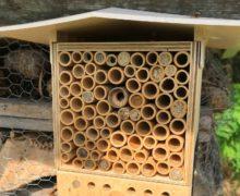Schmetterlinge-für-die-Bienenwiese-5