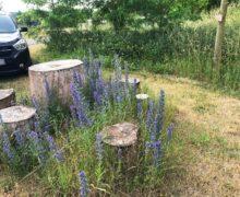 Schmetterlinge-für-die-Bienenwiese-6-