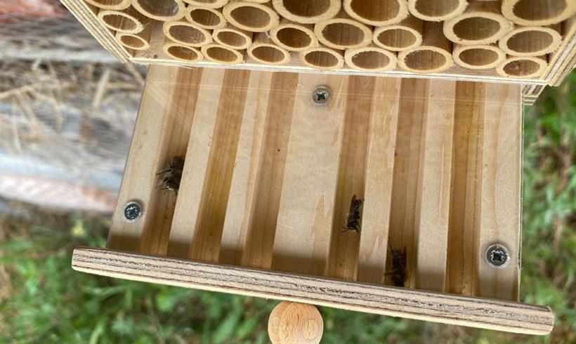 Die Bewohner der Bienenwiese
